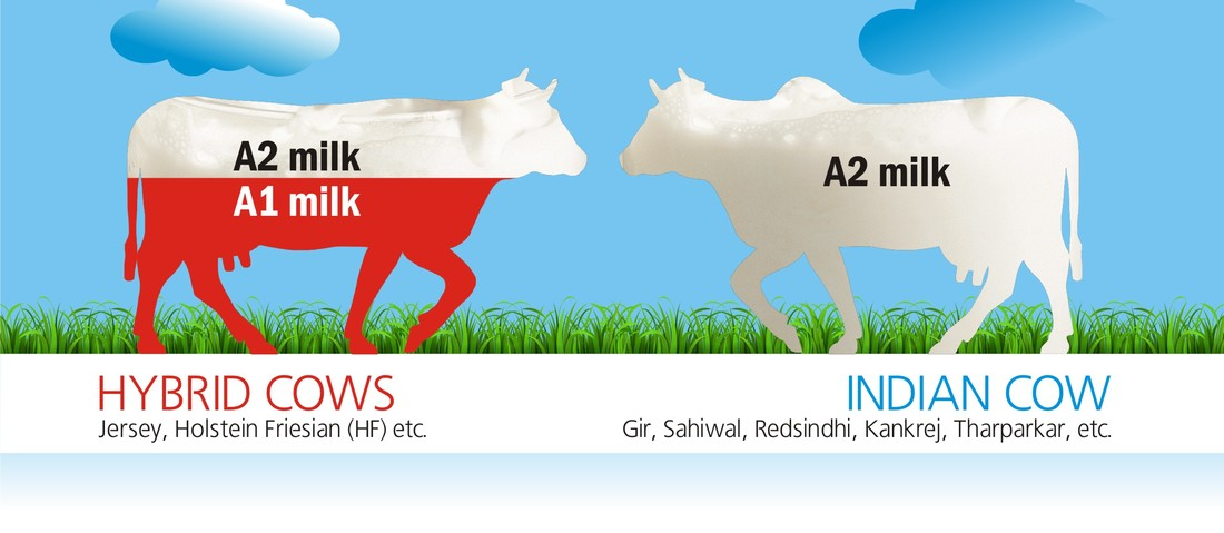 Daulat Farms A2 milk and A1 milk Comparison